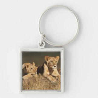 Orgullo de leones masculinos jovenes llavero cuadrado plateado
