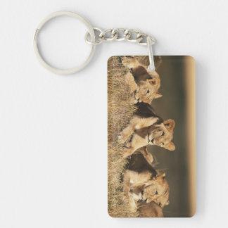 Orgullo de leones masculinos jovenes llavero rectangular acrílico a doble cara