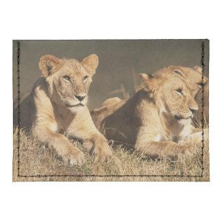 Orgullo de leones masculinos jovenes tarjeteros tyvek®