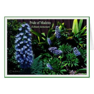 Orgullo de Madeira - fastuosum del Echium Tarjeta De Felicitación