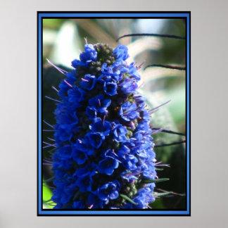 Orgullo púrpura de Madeira Poster