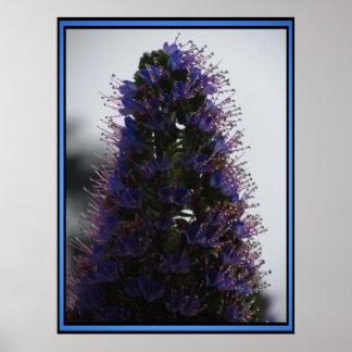 Orgullo púrpura de Madeira Póster