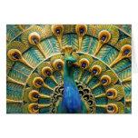 Orgulloso como tarjetas de una nota del pavo real