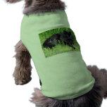 Orgulloso real felino del pelo largo mullido del g camisetas de mascota