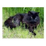 Orgulloso real felino del pelo largo mullido del g postal