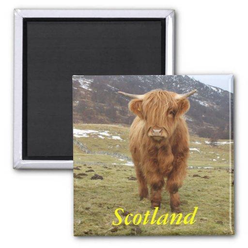 ¡Orgulloso ser escocés! Imán Cuadrado