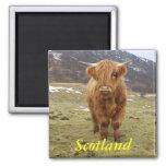 ¡Orgulloso ser escocés! Imán De Nevera