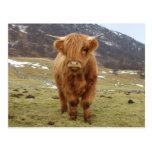 ¡Orgulloso ser escocés! Tarjetas Postales