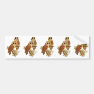 Oriental Bay Owl Bumper Sticker