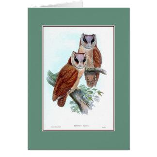 Oriental bay owl, restored antique card