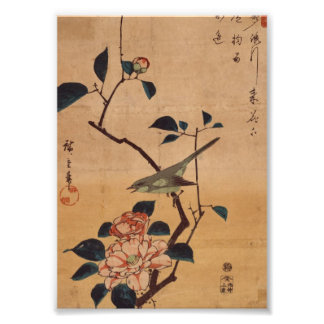 Oriental Camellia and Warbler Photo Print
