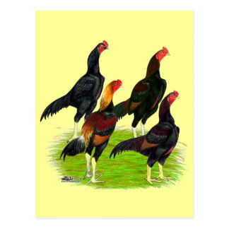 Oriental Game Fowl Quartet Postcard
