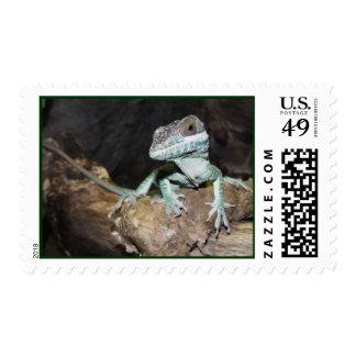 Oriental Knight Anole Lizard Postage Stamp