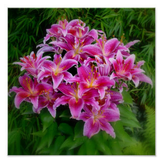 Oriental Lilies Posters