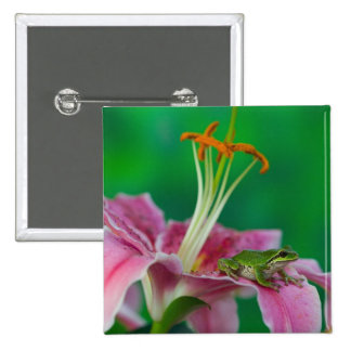 Oriental Lily and Pacific tree frog resting on 2 Inch Square Button