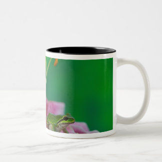 Oriental Lily and Pacific tree frog resting on Two-Tone Coffee Mug