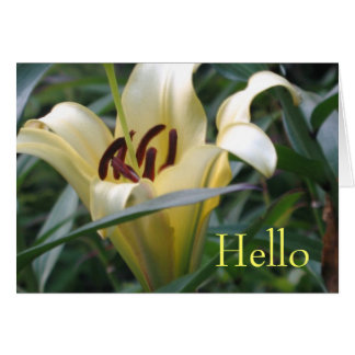 Oriental Lily Card