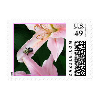 Oriental Lily with Bee Stamps