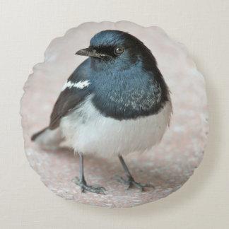 Oriental Magpie-Robin (Copsychus saularis) Round Pillow