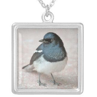 Oriental Magpie-Robin (Copsychus saularis) Silver Plated Necklace