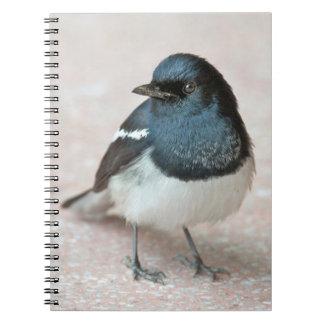 Oriental Magpie-Robin (Copsychus saularis) Spiral Notebook