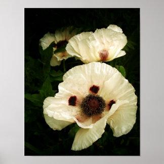Oriental Poppies Cream Posters