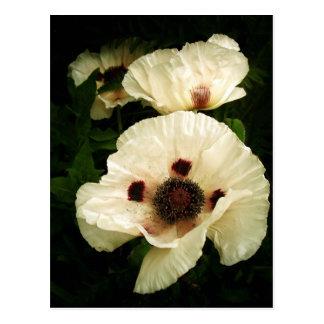 Oriental Poppies In Cream Postcard