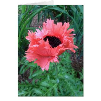 """Oriental POPPY """"Pink Ruffles"""" --- Card"""
