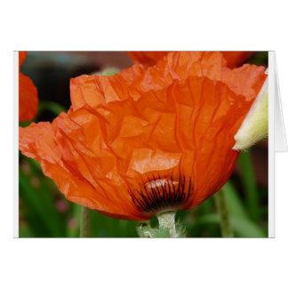 oriental poppy side view card