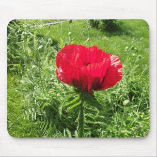 Oriental Red Poppy Mousepad