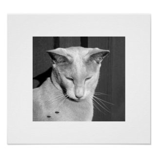 Oriental Shorthair Cat Print