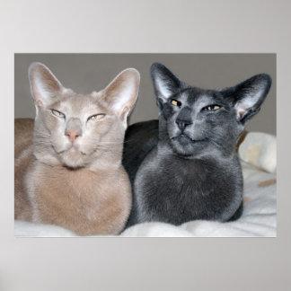 Oriental Shorthair Cats Print