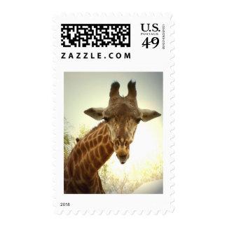 Orig de la jirafa - zaz envio