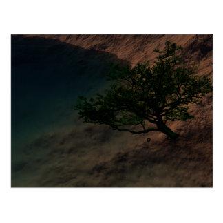 Origin Of Tranquility Postcard