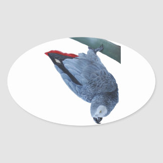 Original African grey parrot gifts Oval Sticker