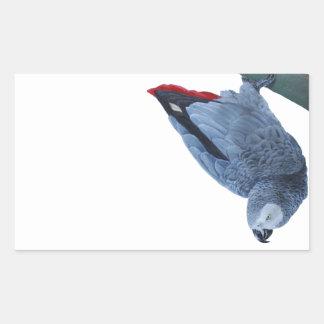 Original African grey parrot gifts Rectangular Sticker