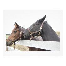 Original Horse Whisperer Flyer