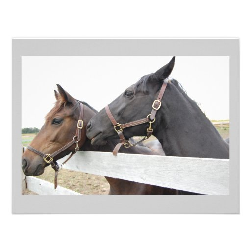 Original Horse Whisperer Personalized Announcements