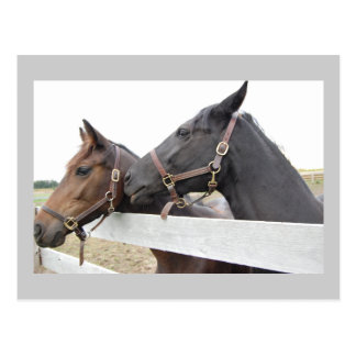 Original Horse Whisperer Postcard
