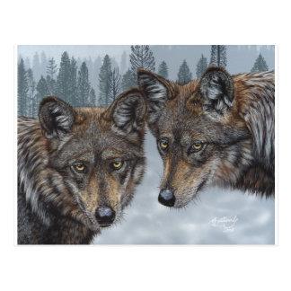 Original Mexican Gray Wolf Art Postcard