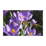 Original Photo Bee Canvas Stretched Canvas Print