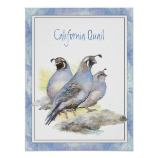 Original Watercolor California Quail Bird Poster