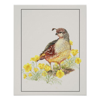 Original Watercolor California Quail Female Bird Poster