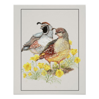 Original Watercolor California Quail Male & Female Poster