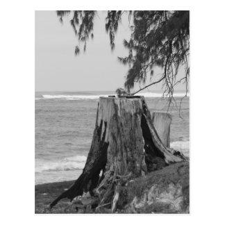 Originales de Hawaii por Tacchi Tarjetas Postales
