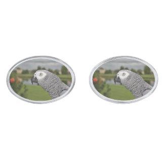 Orilla del lago del gris africano gemelos plateados