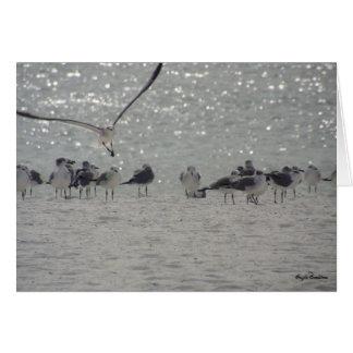 Orillas del golfo, tarjeta de nota de las gaviotas