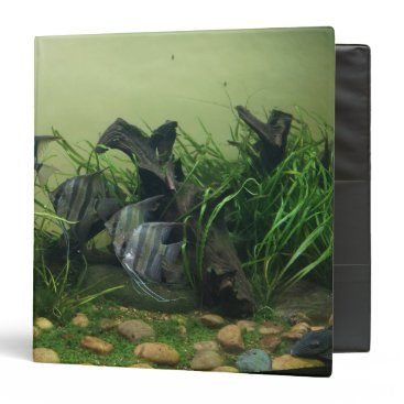 everydaylifesf Orinoco Angelfish Binder