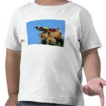 Oriole encapuchado, varón, comiendo blossum del camisetas