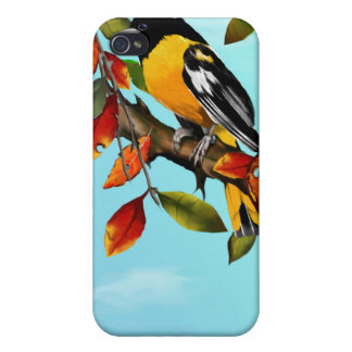 Oriole In Fall  iPhone 4/4S Cases